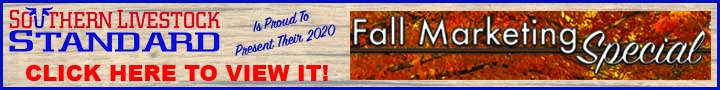 Fall Marketing 2020_banner